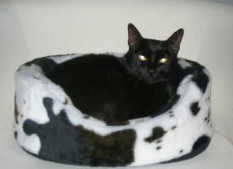 Cat Xenia