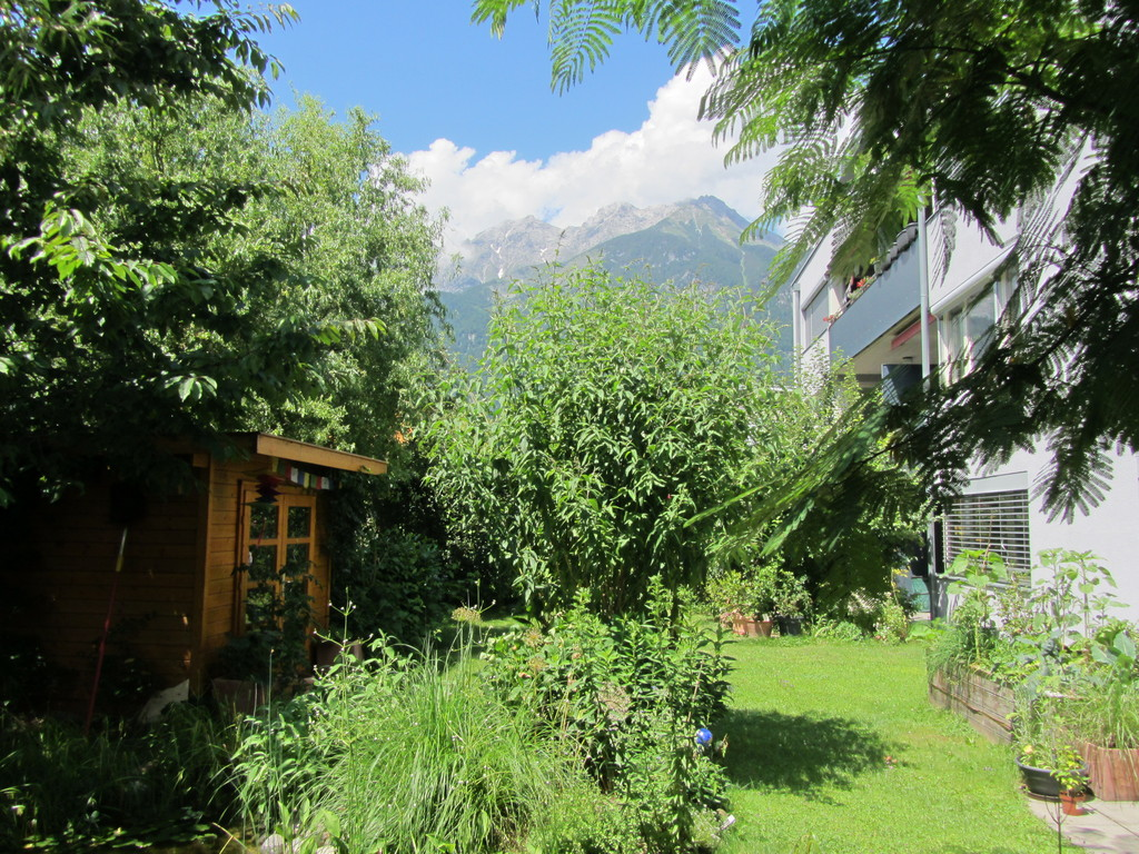 Garden with mountain view