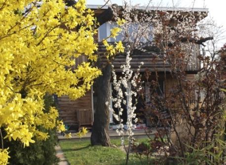 in spring time