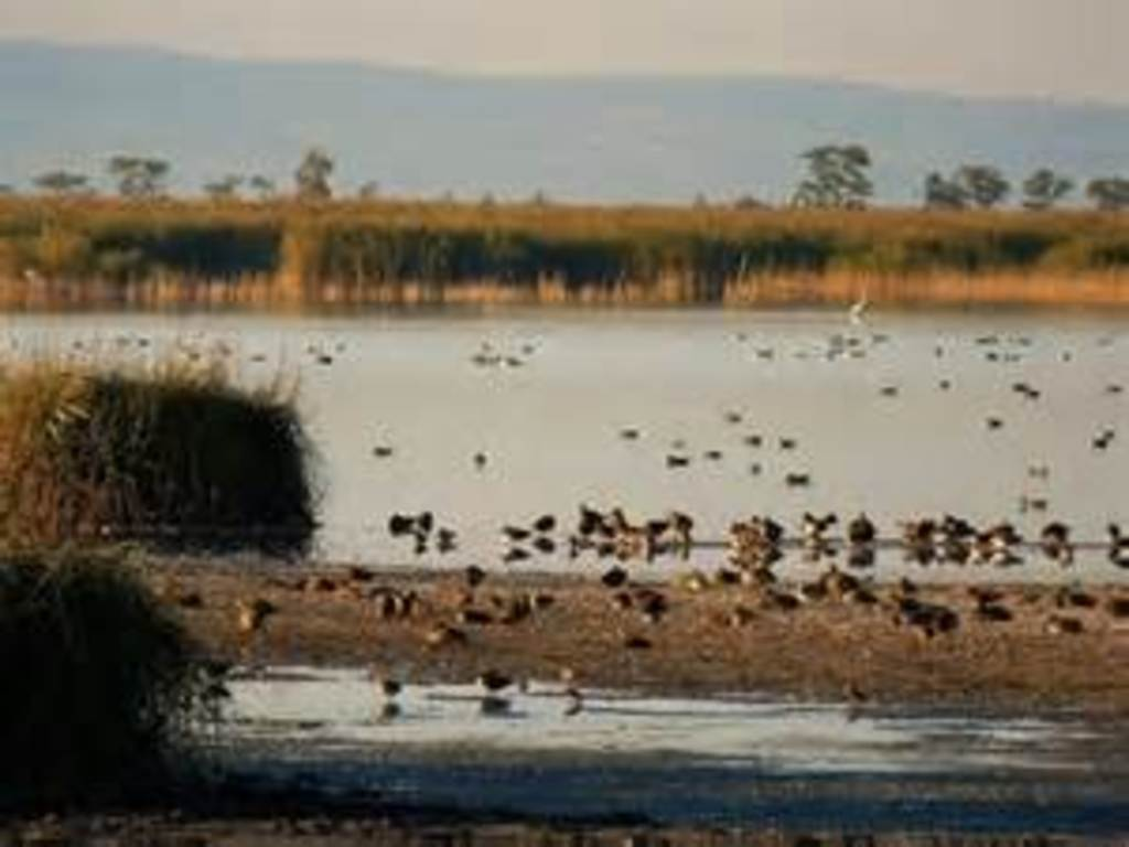 Neusiedlersee, 45 min with the car, close to Hungary you will get the impression of the Pannonian Basin with many birds