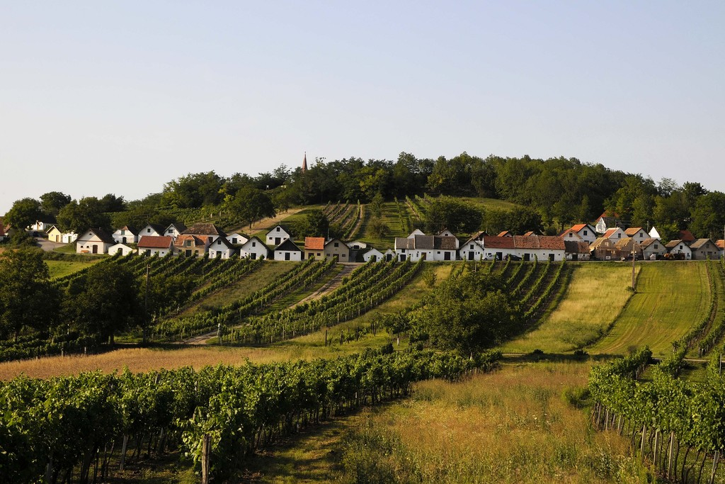 soft hills and vineyards in our region