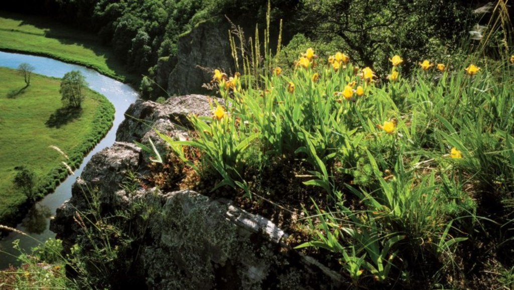 National Park Thayatal