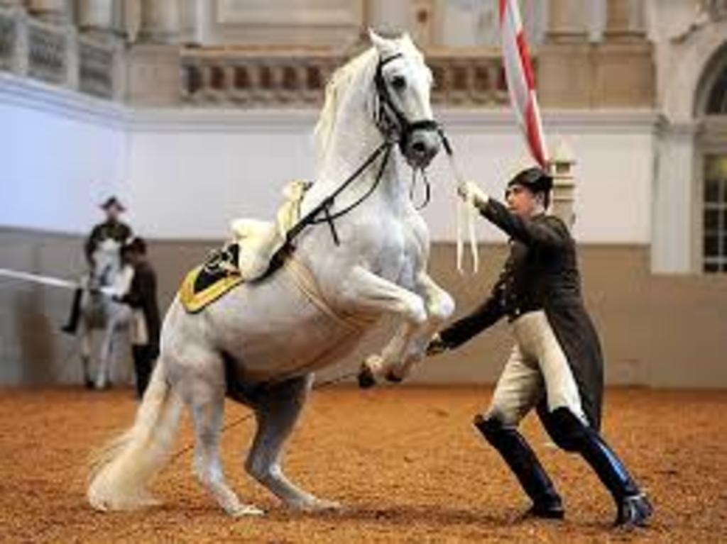 "Spanish riding school with the famous Austrian horses ""Lippizaner"""