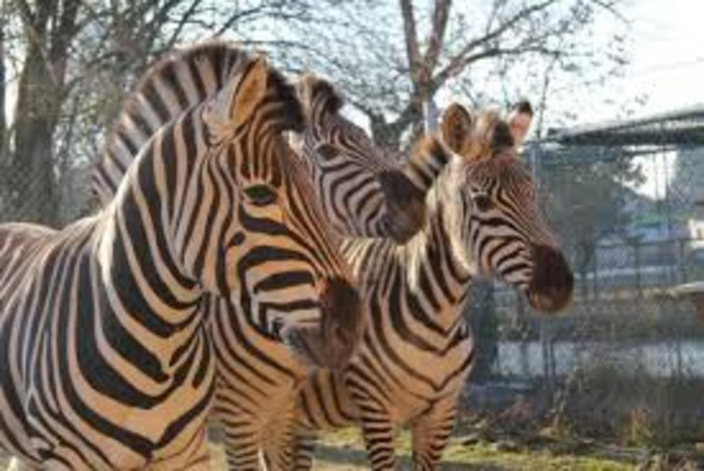 Doppelmayer Zoo - little Zoo in WOLFURT