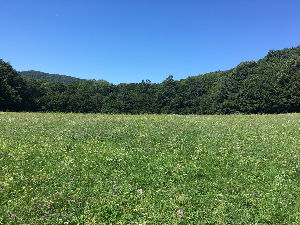 Meadow near the house