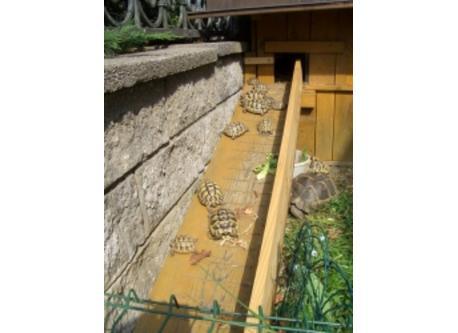 Turtoises