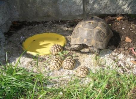 Turtoise with kids