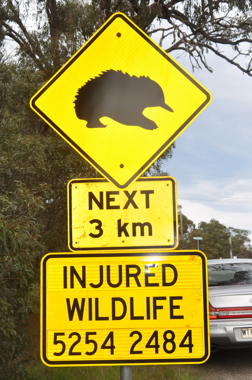 Watch out for Echidnas crossing!