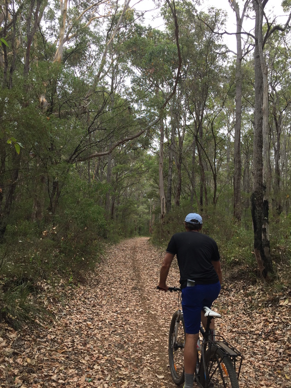 Forest bike trails which you can access straight from our house