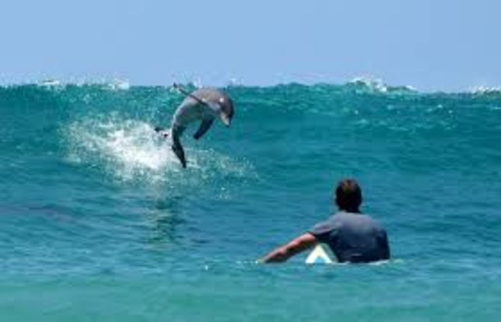 Surfing with theDolphins