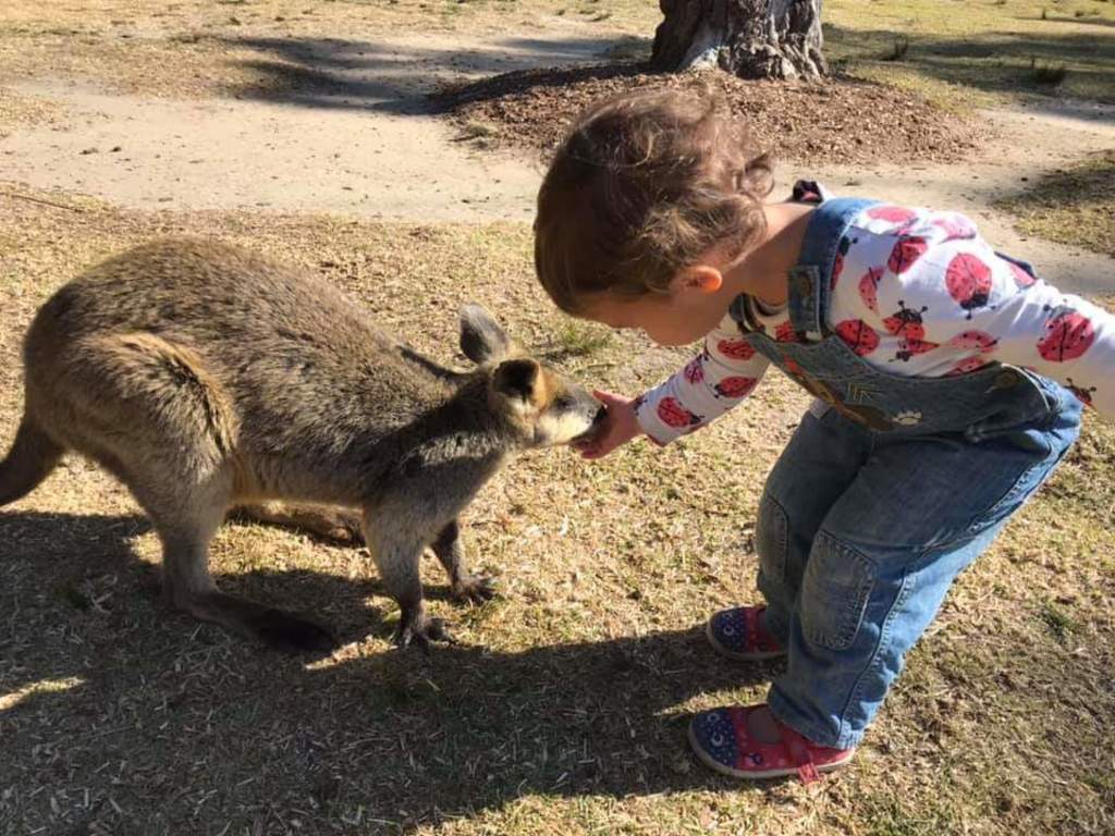 Feeding the kangaroos at Symbio Wildlife Park