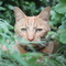 our cat 'Couscous'