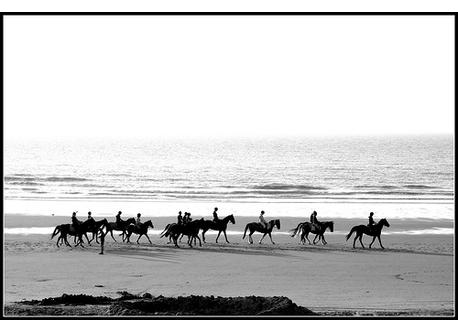 horse riding on the beach of Westende
