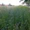 Flower Field, Edegem