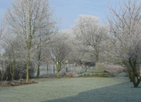 Back garden in winter.