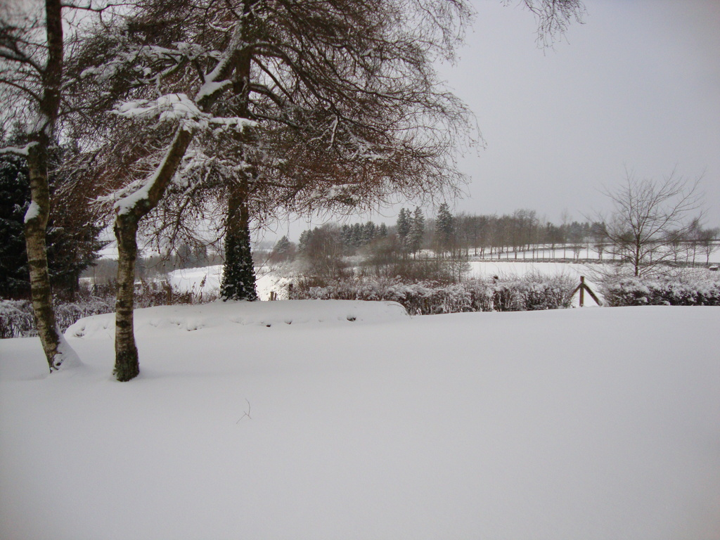 backgarden in winter