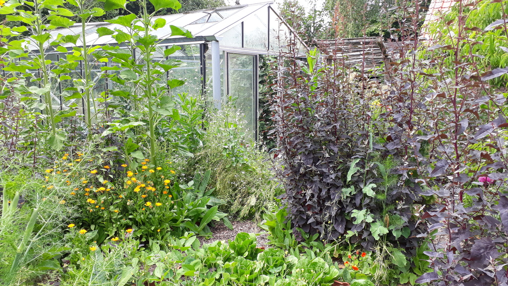 We have a wild vegetable and fruit garden with greenhouse, it's more a food forest, based on permaculture principles.