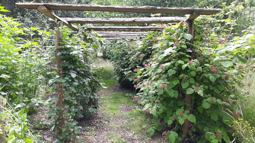 A lot of berries everywhere in the garden. Guests can harvest fruit and vegetables that are ready at the moment of their stay.