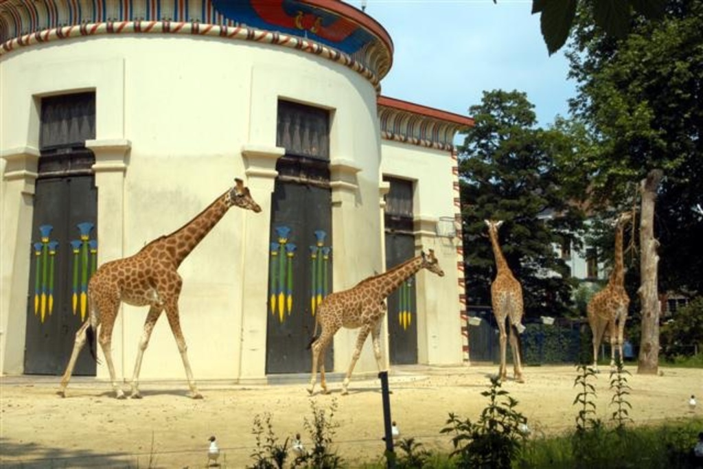 Antwerp Zoo is a zoo in the centre of Antwerp, located right next to the Antwerpen-Centraal railway station. It is the oldest...