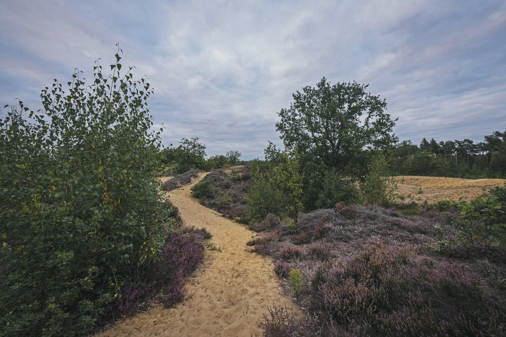 Nature Preserve Bosland (heathland, dunes and woods - 150km from the sea!) 1h drive