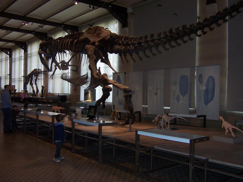 Museum voor Natuurwetenschappen - Brussels