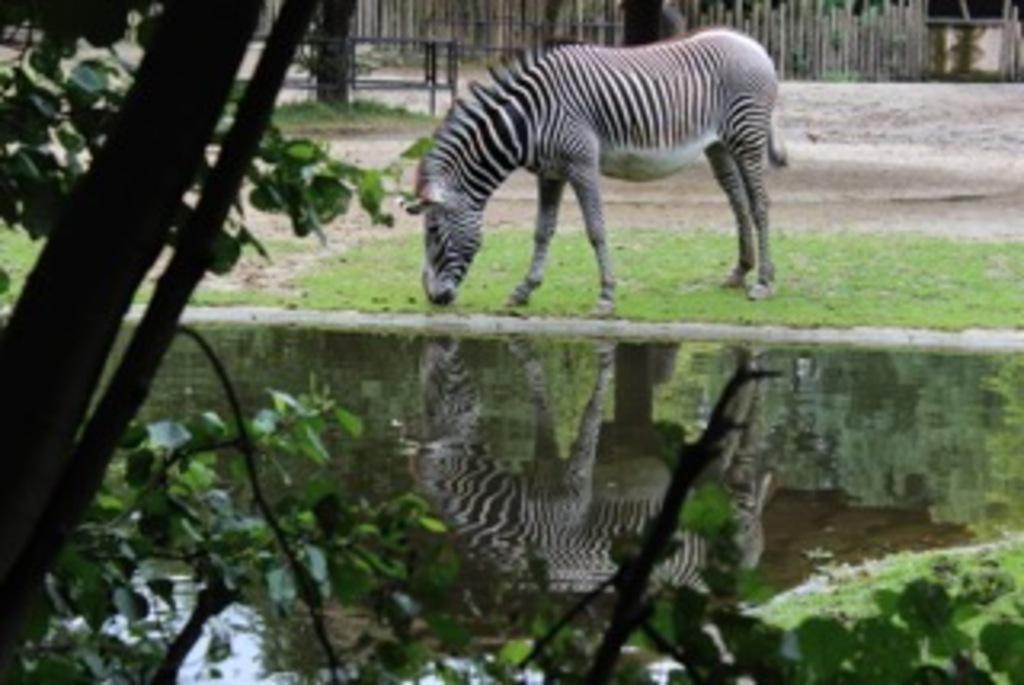 planckendael zoo 40,4km