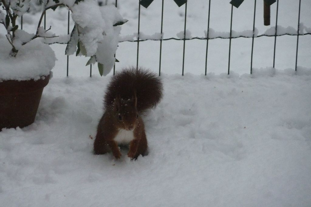 un écureuil sur la terrasse