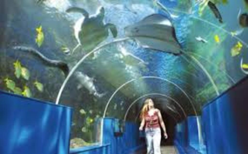 Sea Life Center Blankenberge