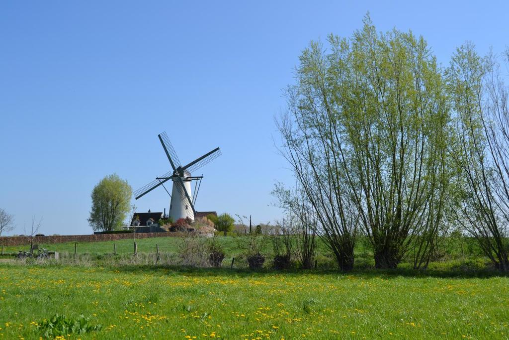 Ancient wind mill, walking through the fields (5' from our house)