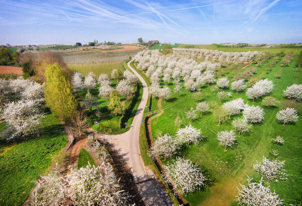 Fruit orchards, blossoms, bike & walking routes