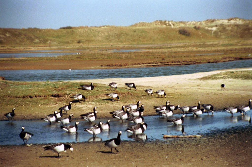 Zwin reserve at the Belgian coast, ideal for birdwatching, nice activities for kids