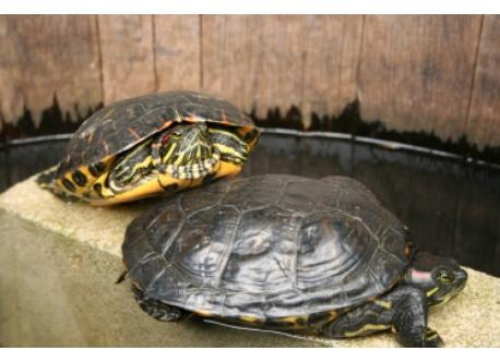 Turtles: Black and Decker