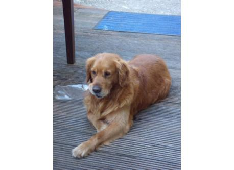 Tosca, onze lieve hond