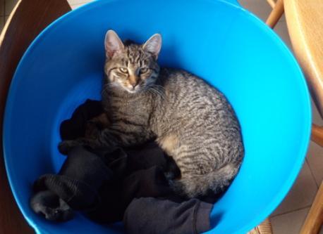 Toulouse, onze kat