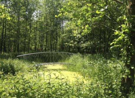 Bridge over little pond in our forest