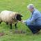 Bruno feeds the sheep