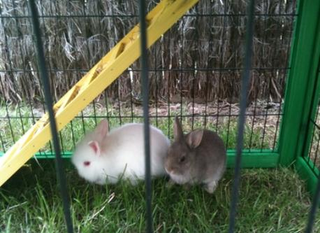 our rabbits