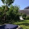 The sunny garden...