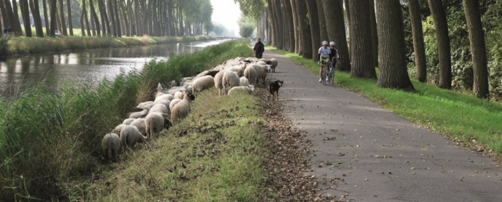 cycling network brings you to the most beautiful places in flanders. Damme 5km from our house