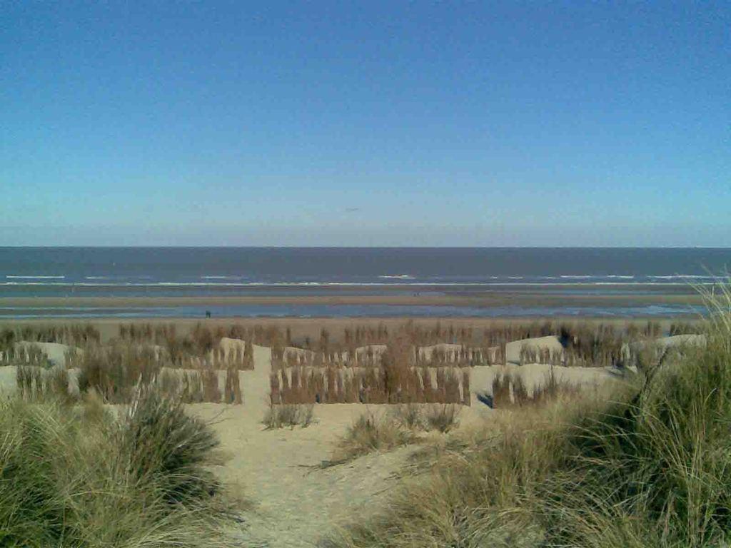 Blankenberge dunes