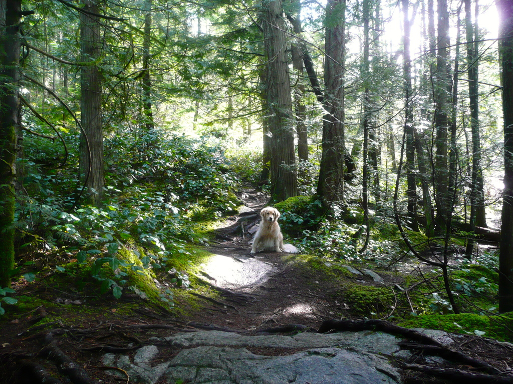 Hundreds of hiking and walking trails are minutes from our home.