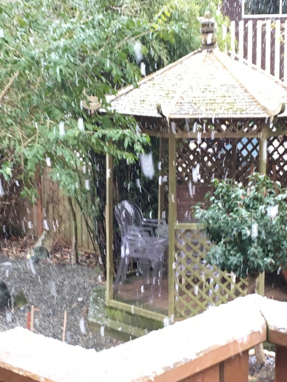Garden gazebo in a February snow flurry.