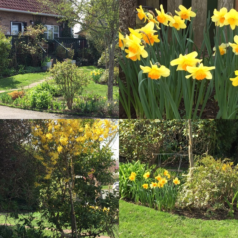 Spring has just arrived - front garden.