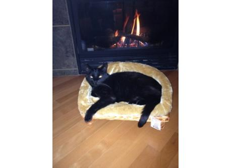 our cat Sammy
