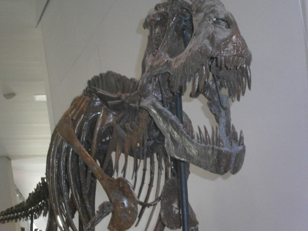 Dinosaurs at Museum