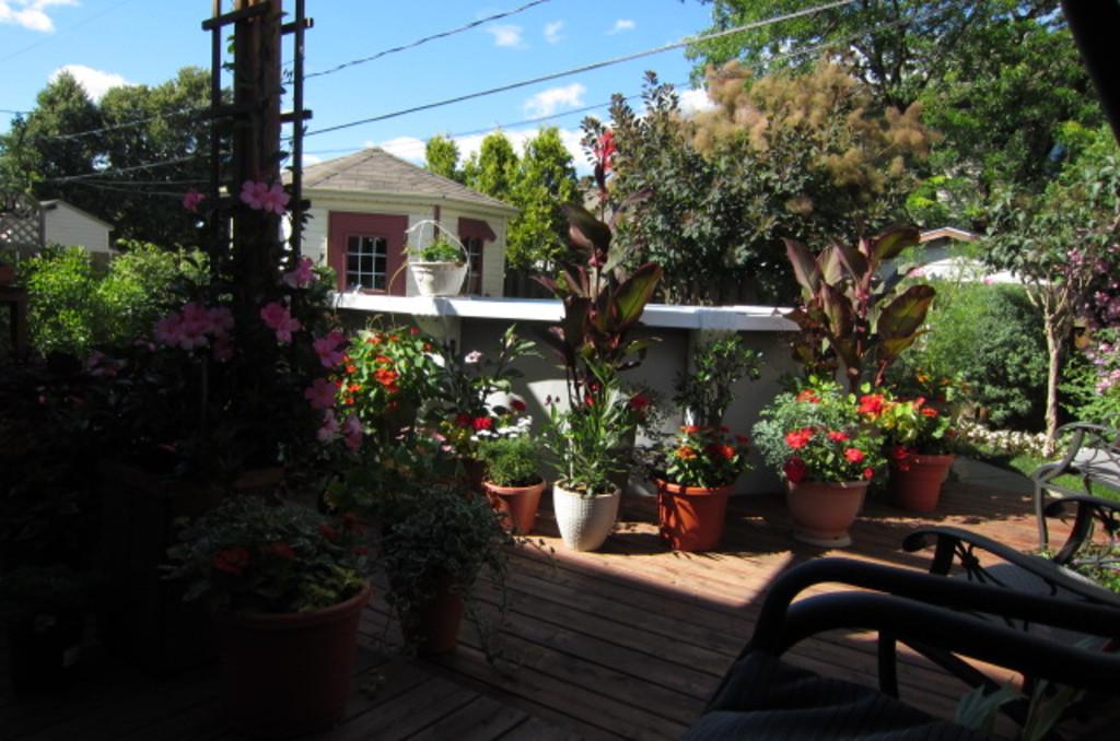 Terrasse et piscine arrière