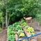 Our back garden - backs on to Millcreek Ravine.