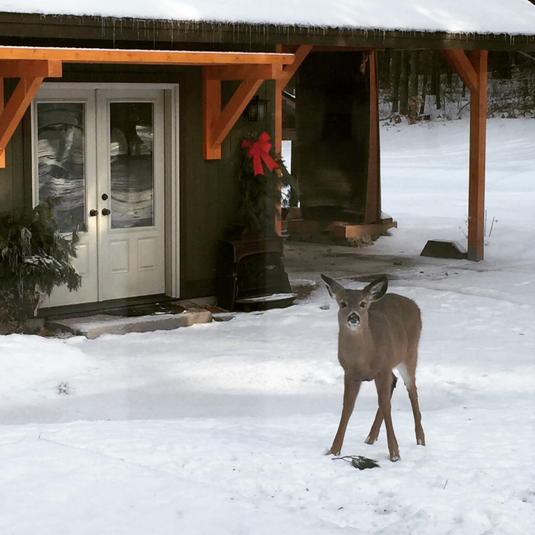 a winter visitor in front of the studio