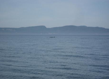 Whale's excursion
