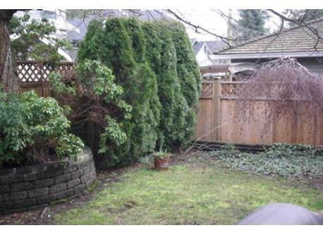 Back garden (verdant in summer!)